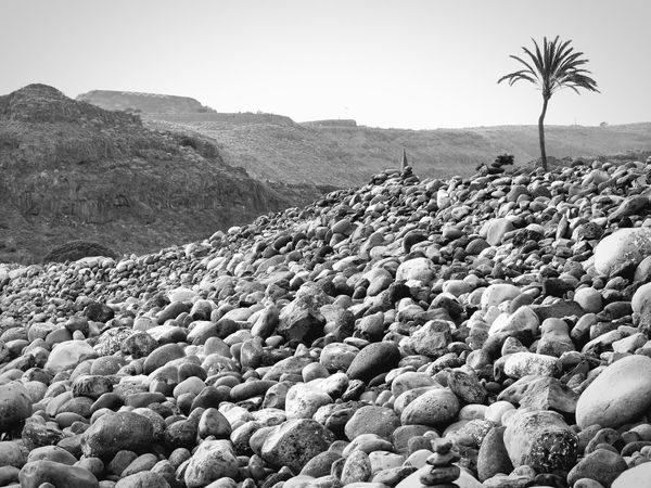 Lonely Date Palm Tree- Einsame Dattelpalme Playa De Santiago La Gomera Reisefotografie Travel Photography Canary Islands Kanarische Inseln La Gomera Black And White Alleinstehender Baum Solitary Tree Low Angle View Kieselstrand Dattelpalme Date Palm Tree Nature Outdoors Day Tranquil Scene Tree Beauty In Nature No People Pebble Beach Landscape