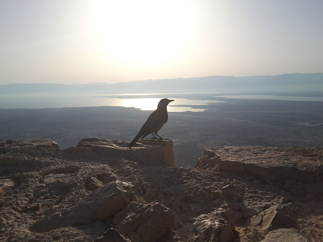 Sea Silhouette Sunset Nature Outdoors Only Men Beach Adult Day One Man Only Water Sky People One Person Adults Only Horizon Over Water Horizon Animal Themes Bird Mammal Masada Israel Summergefühle Breathing Space