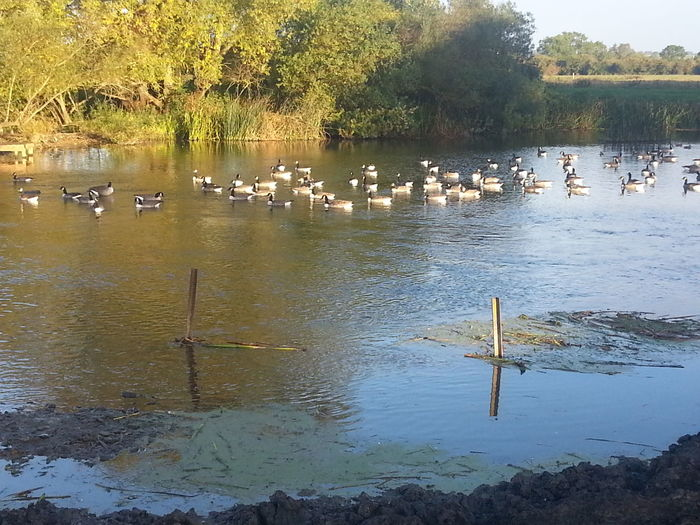 Lake Olney Buckinghamshire Outdoors River View Riverscape Samsung Galaxy S3 Water Wildlife Birds