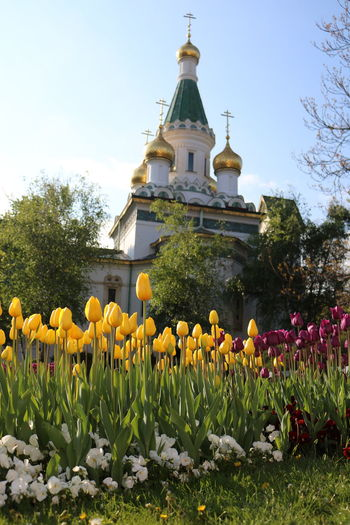 Architecture Beauty In Nature Blooming Building Exterior Built Structure Church Day Flower Flower Head Freshness Gold Growth Nature No People Outdoors Place Of Worship Religion Russia Russian Church Sky Spirituality Tree Yellow