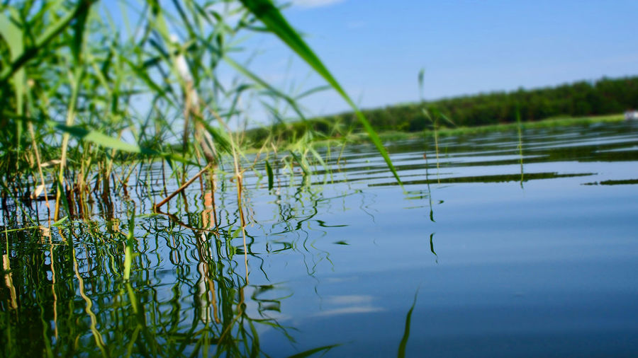 Seeufer, Lake Beauty In Nature Blade Of Grass Blue Day Focus On Foreground Grass Green Color Growth Lake Nature No People Non-urban Scene Outdoors Plant Reflection Scenics - Nature Schilfgras Sky Swamp Tranquil Scene Tranquility Water