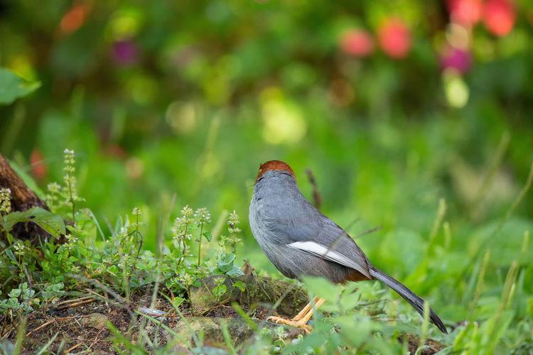 Close-up of a bird perching on a field