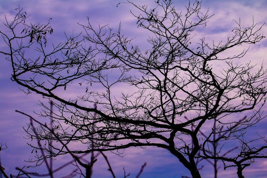 Overcast Sky Bare Tree Beauty In Nature Bird Branch Day Flower Low Angle View Nature No People Outdoors Scenics Sky Tranquility Tree