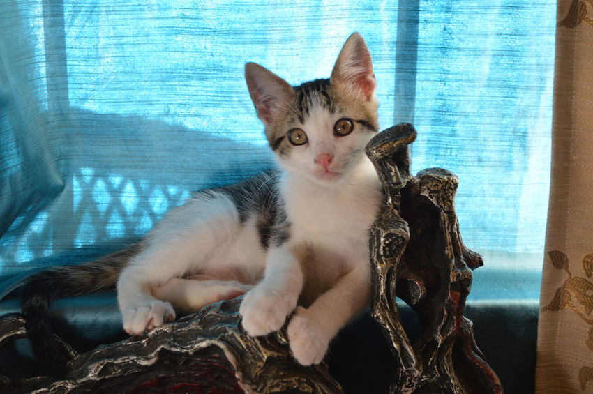 Clyde, the other half of Bonnie and Clyde Animal Animal Themes Cat Close-up Domestic Animals Domestic Cat Feline Kitten Kittens Looking At Camera Mammal One Animal Pets Relaxation Sitting Whisker Whiskers Zoology