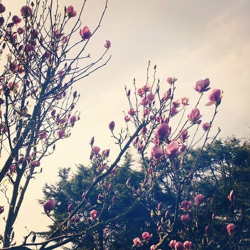 Floralsforspring