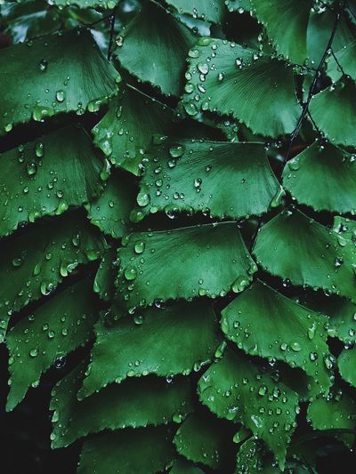 Drop Backgrounds Water Full Frame Green Color Close-up No People Freshness Wet RainDrop Nature Leaf Beauty In Nature Day Outdoors