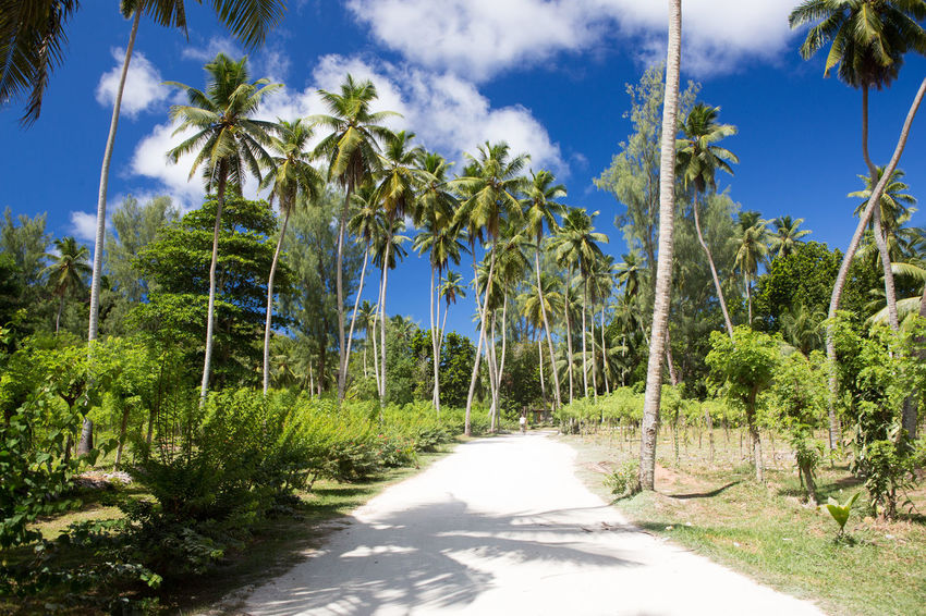 La Digue Anse Lazio Anse Source D'argent Beauty In Nature Blue Cloud - Sky Day Green Color Growth Mahé Nature No People Outdoors Palm Tree Praslin Seychelles Scenics Sky Sunlight The Way Forward Tranquility Tree Tree Trunk