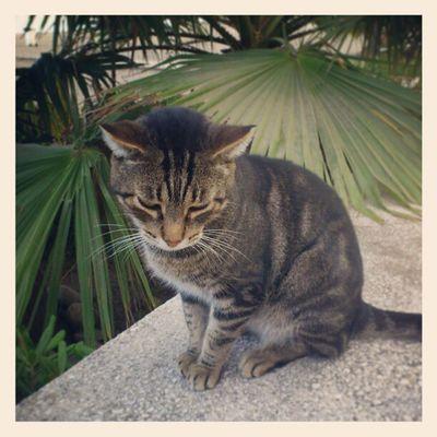 A Playful Cat Puerto Banus puerto_banus marbella spain