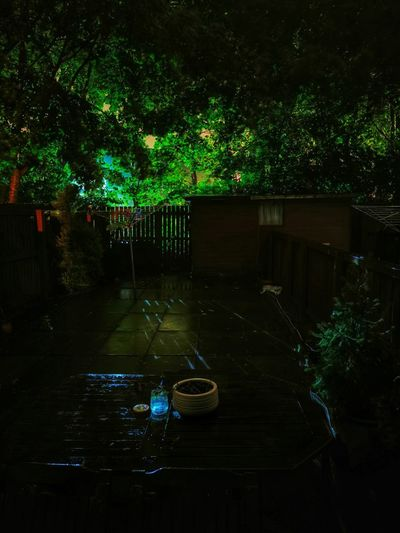 Trees and plants in yard at night