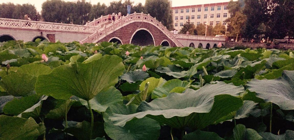 桓仁这小城还能拍出老照片的感觉。