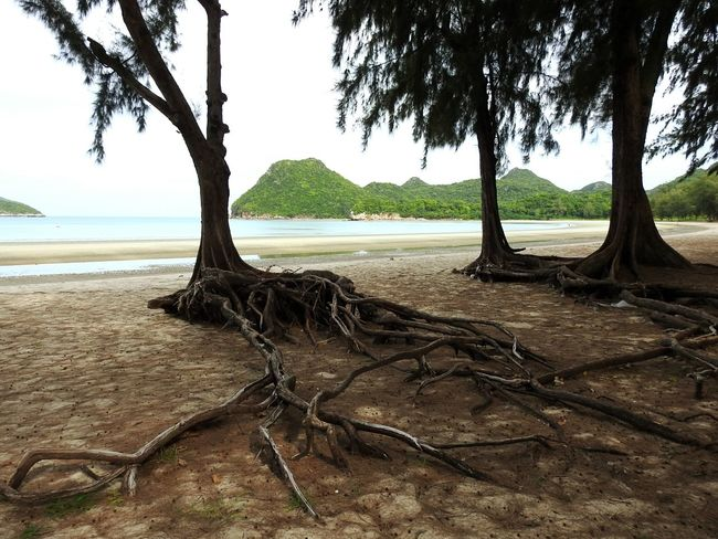 Ao Manao Bay Tree Sand Hot Sea Holiday Sunny Day 🌞 Real Thailand Let's Go. Together. Sommergefühle EyeEmNewHere EyeEm Selects The Gulf Of Siam Prachuap Khiri Khan Summer ☀ Thailand Magic Place ☀️