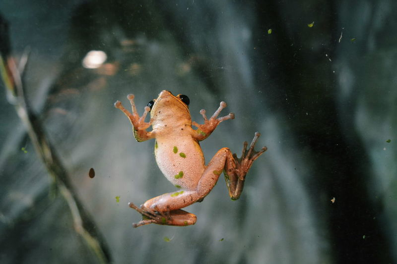 Close-Up Low Angle View Of A Frog On Window