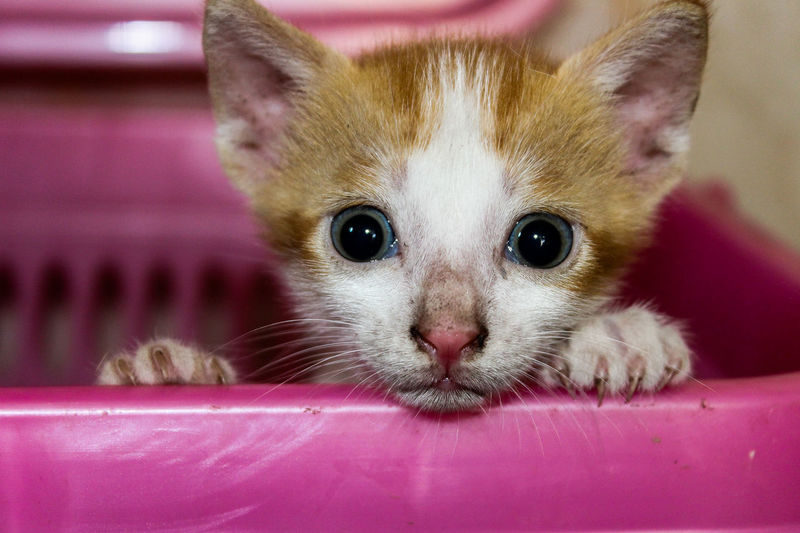 Kitten Tabby Cat Young Animal Infant Animal Family