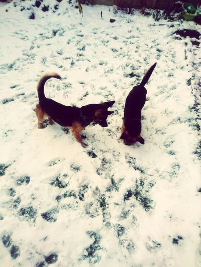 Dogs playing in