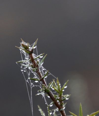 Nature's decoration Spiderweb In Morning Dew Plant Nature Close-up No People Focus On Foreground Day Plant Part