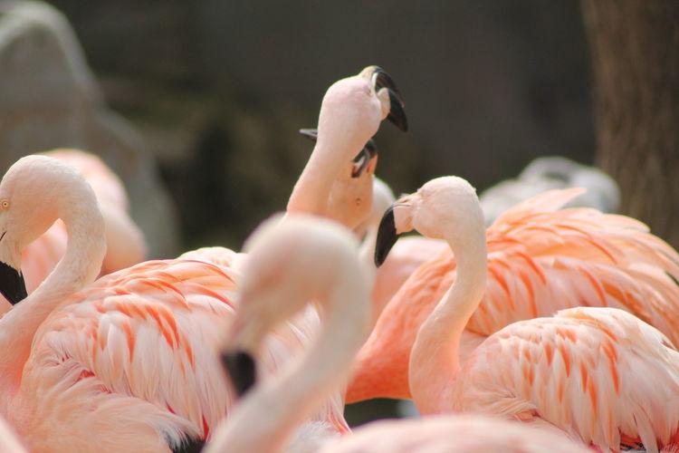 View of birds