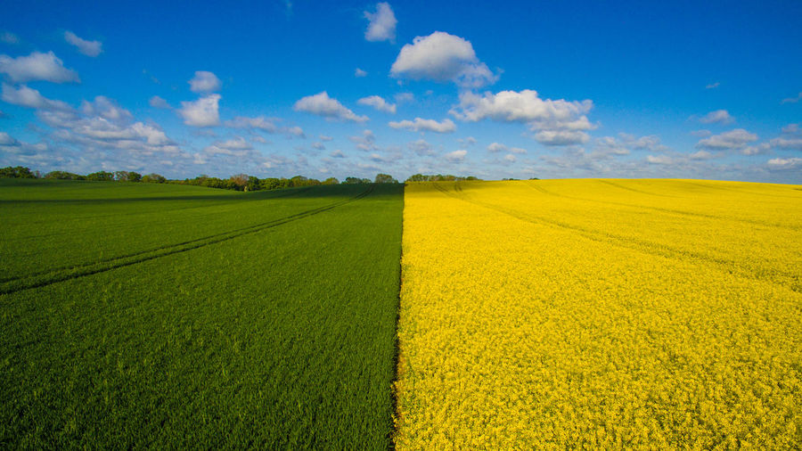 Agriculture Beauty In Nature Blue Cloud - Sky Crop  Cultivated Cultivated Land Day Distant Farm Field Green Color Growth Landscape Nature No People Outdoors Rural Scene Scenics Sky Surface Level Tranquil Scene Tranquility Wide Yellow