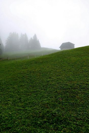 Field Tranquil Scene Landscape Rural Scene Tranquility Beauty In Nature Green Color Nature Foggy Morning Agriculture Field Tranquil Scene Landscape Rural Scene Tranquility Green Color Growth Grass Beauty In Nature Scenics Farm Nature Crop  Plant Cultivated Land