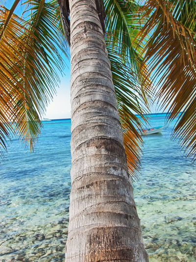 Beach Beauty In Nature Close-up Day Horizon Over Water Nature No People Outdoors Palm Tree Sand Scenics Sea Sky Tranquil Scene Tranquility Tree Tree Trunk Vacations Water
