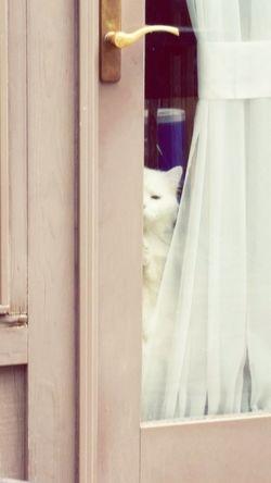 Hello World Enjoying Life Augustphotochallenge Animal Themes White Cats Peeking Cat Check This Out Cats Pets Cute Catsoneyeem Animal Head  Homeiswheretheheartis Domestic Cat Headshot Homeiswheretheartis