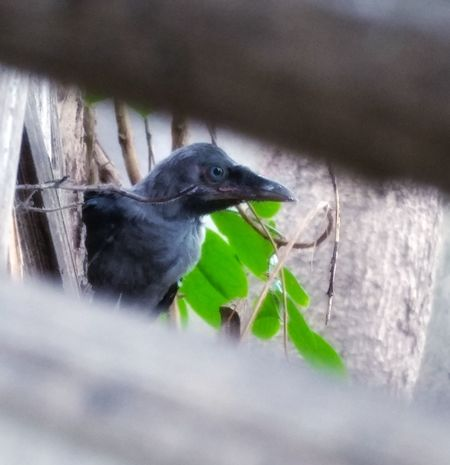 Hatchling One Animal Animal Animal Wildlife Animals In The Wild No People Animal Themes Nature Black Color Close-up Outdoors