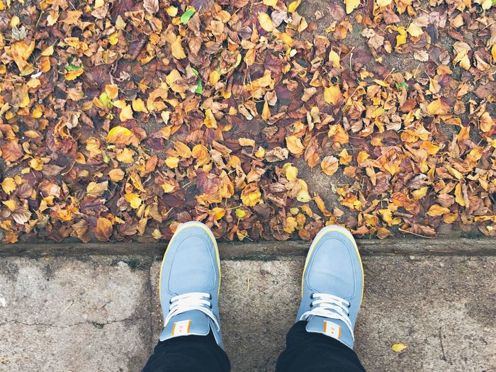 Showcase April Leaves Fall Autumn Colors Cold Nice April Love Home Backyard