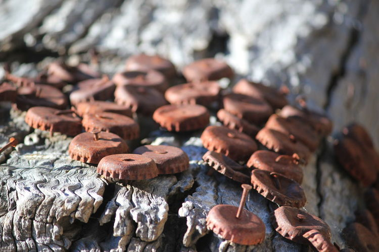 Close-up of bottle caps on wood