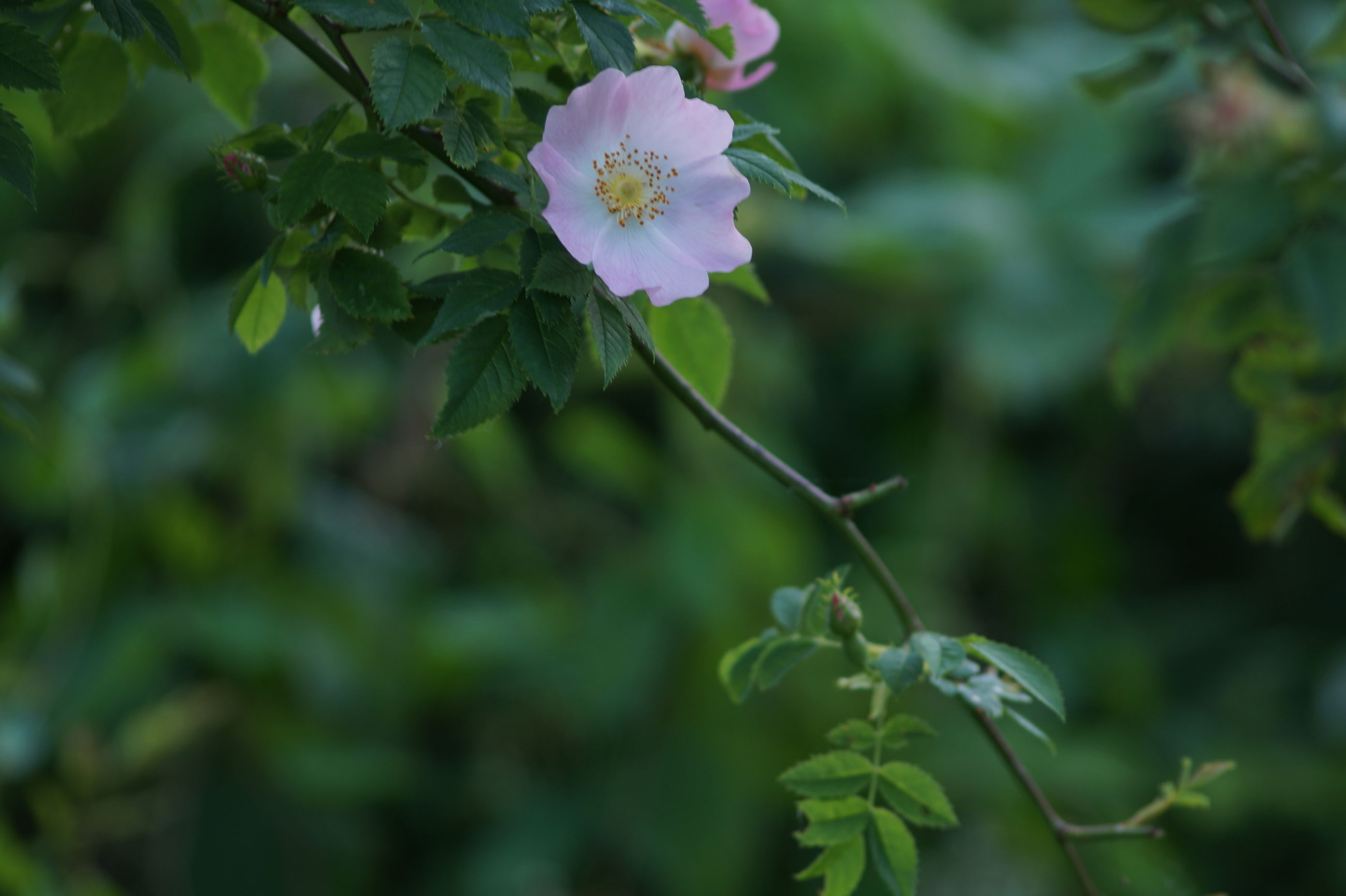 flower, growth, nature, fragility, beauty in nature, plant, freshness, blooming, outdoors, no people, day, close-up, flower head