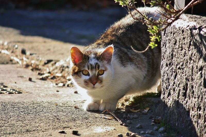Cat Cat Lovers Cats Animal Photography