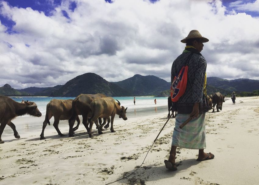 Buffaloes. Selong Belanak. Lombok Lombok-Indonesia INDONESIA Indonesia_photography Buffaloes Beach Indonesia Scenery EyEmNewHere IPhoneography IPhone