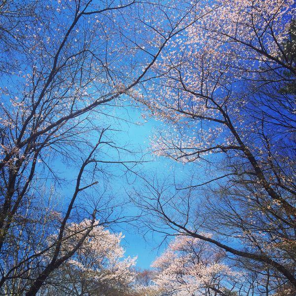 🇰🇷🏫🌸 Urban Spring Fever Traveling Showcase April 벚나무 Enjoying The Sun Beautiful Nature Reading