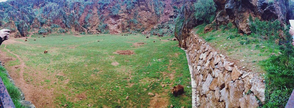 SPAIN Santander Séjour Parc Naturel Ours Wild Nature Animaux