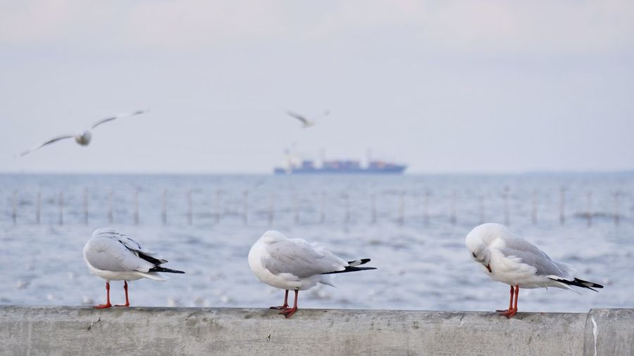 Seagulls perching on sea shore against sky