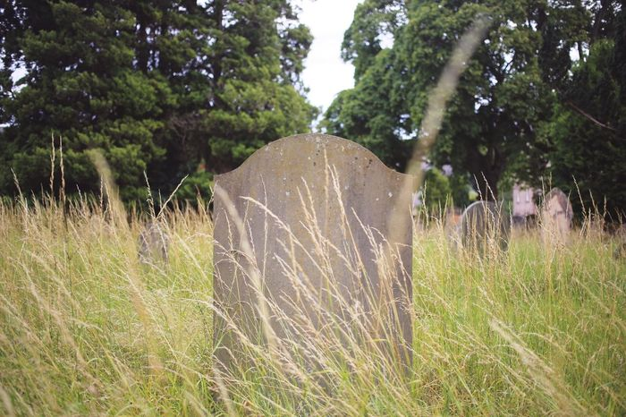 Graveyard Grave Cemetary Tombstone Plant Tree Growth Nature Day Field Land