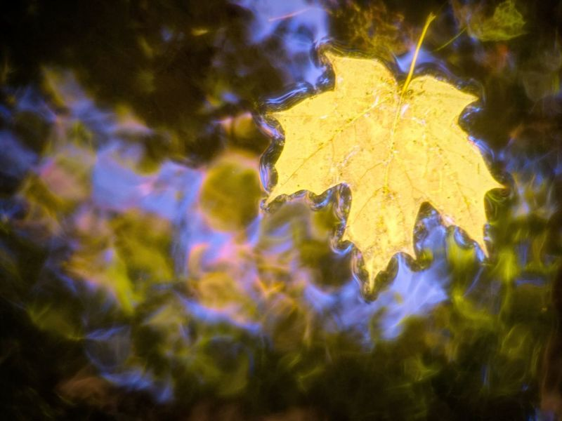 Tell me again that you love me Autumn Autumn colors Autumn Leaves Colors Copy Space Tranquility Backgrounds Beauty In Nature Colorful Copenhagen Day Fall Leaf Meditative No People Outdoors Peaceful Refelctions Seasons Water