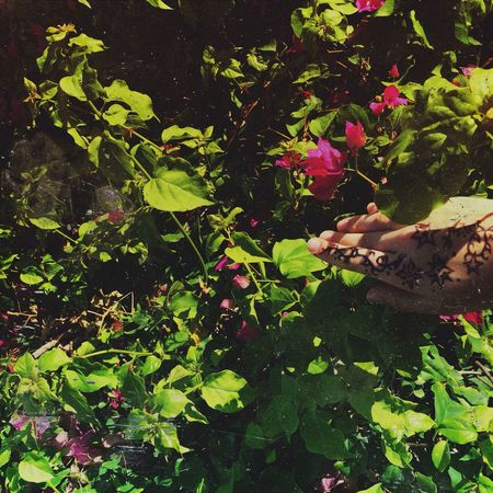 Flowers Nature Spring Vscocam May 2014