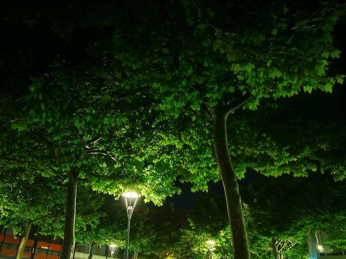 Nights In The City / Nachts In Der Stadt Mainz Tree Night Nature Tree Area Outdoors City City Lights