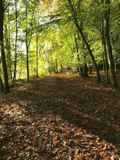 Autumnal walk Tree Nature Plant No People Sunlight Land Day Tranquility Fence Boundary Outdoors Field Plant Part Leaf Beauty In Nature Growth Autumn Change Shadow