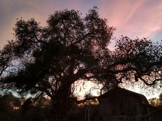 Tree Sunset Silhouette Sky