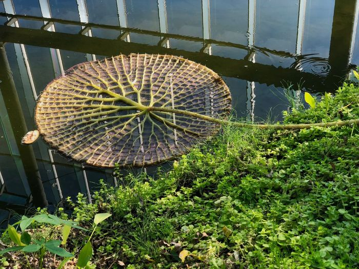 Botanical Garden Texture Geometric Shape Floating On Water Lines Pond Aquatic Plant Plant Day Growth No People Outdoors Built Structure Nature Architecture