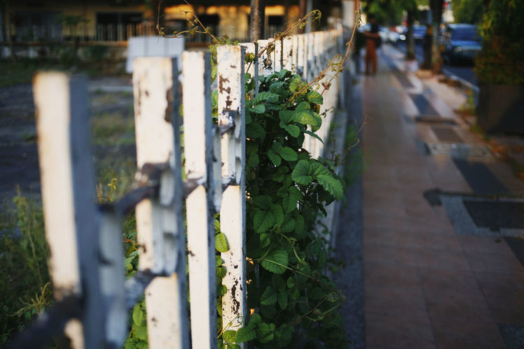 Selective Focus In A Row Day No People Nature Focus On Foreground Plant Close-up Growth Leaf Outdoors Green Color Plant Part Barrier Fence Boundary Architecture Sunlight