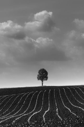 Blackandwhite Single Tree Cereal Dramatic Sky Growth Lines Agriculture Cloud - Sky Courage Fertility Field Fortidude Landscape Lone Loniless Nature No People Nutrition Organic Plant Protection See Sustainability Symmetry Thunderstorm Tree Vegetable Weatherproof
