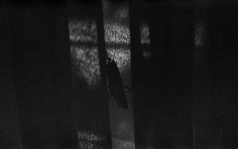 35mm Film Black