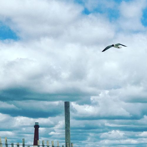 Sky Bird Cloud - Sky Animal Themes Animals In The Wild Day Flying One Animal Outdoors Animal Wildlife Nature No People Low Angle View Spread Wings Beauty In Nature Architecture The Still Life Photographer - 2018 EyeEm Awards