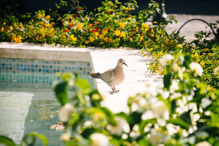 Bird perching by swimming pool