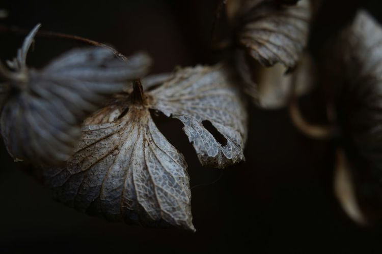 Capture The Moment Darkness And Light Dried Leaves Withered Beauty Nature Leaf Macro Beauty Macro Still Life Fine Art Depth Of Field Close-up Selective Focus Abstract Day Fragility Light And Shadow Beauty In Nature Growth Full Frame Detail Oldlens ROKKOR EyeEm Best Shots 17_01