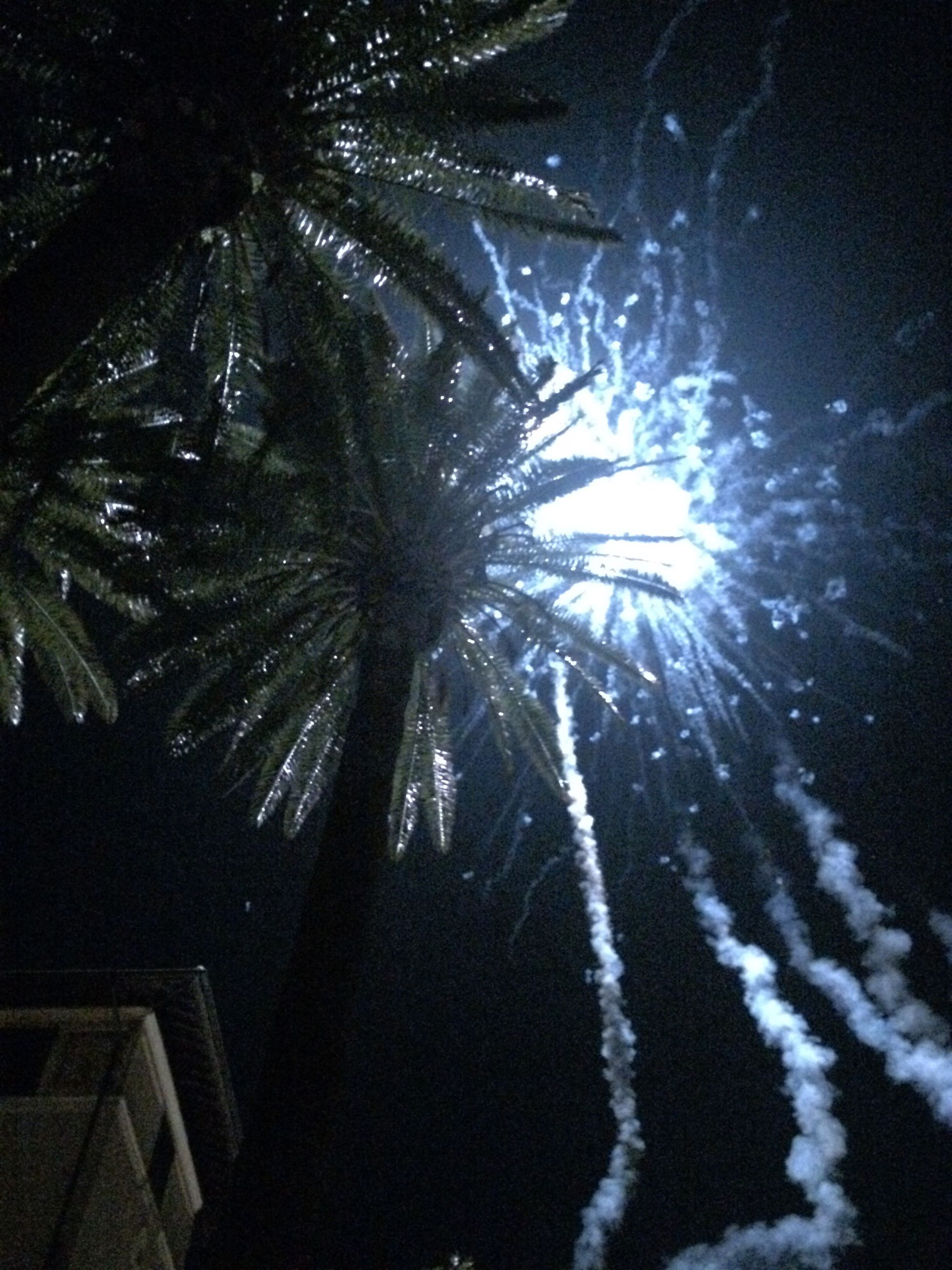 low angle view, tree, silhouette, sunlight, sunbeam, sun, growth, lens flare, nature, sky, tranquility, night, branch, outdoors, beauty in nature, palm tree, no people, back lit, bright
