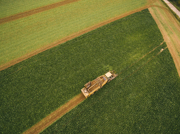 High angle view of crops on field