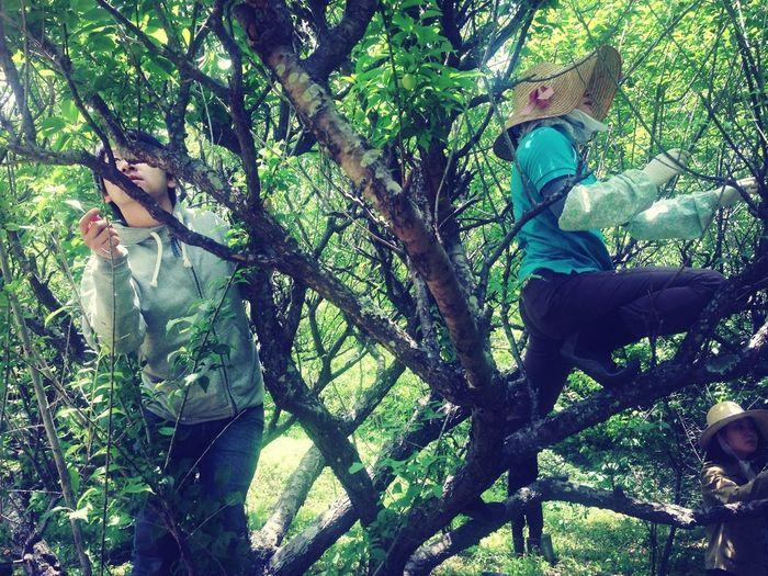 久々の木登り
