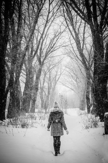 Winter Fairytale  Fairy Branches Forests Nature Cold Temperature Loneliness Lonely Girl Snowing Snow Tree Clouds Panorama Black&white